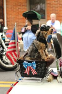Dog in the parade