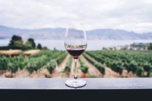 wine glass overlooking an orchard