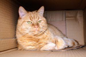 A cat in a cardboard box.