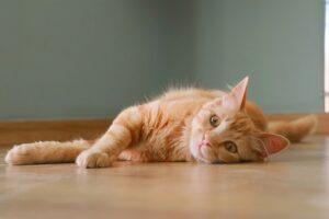 Cat on floor.